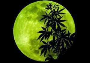 Calendario Lunar Cannabico 2017