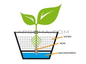 Sistema hidroponico Wick una planta