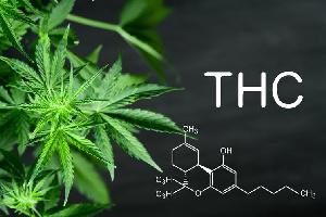 Marihuana thc