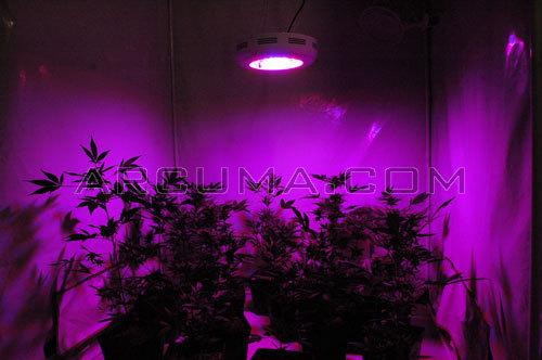 Leds y marihuana for Leds para cultivo interior