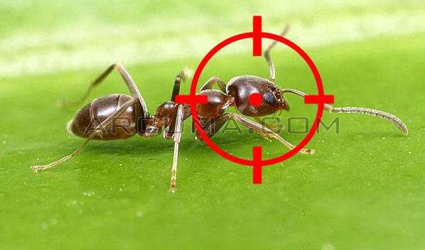 Remedios caseros contra las hormigas - Remedios caseros para eliminar hormigas en casa ...