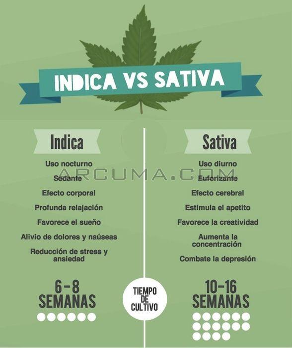 Caracteristicas marihuana indica y sativa