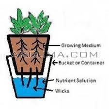 sistema hidroponico wick cuatro plantas