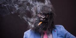 smoking-monkey-cannabis-info-768x384.thumb.jpg.7eadf468d4aac3acd8a7443a840890b6.jpg