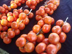 tomate-colgar.thumb.jpg.c309d3272a0a9463b3d791be465d80b0.jpg