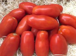 tomate-pera.thumb.jpg.1e42406abbd371ffe1a2030ebc05262a.jpg