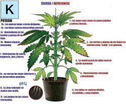 0498-marihuana-potasio.thumb.jpg.77f339eabc3720f6a25b0f461b1b74a5.jpg