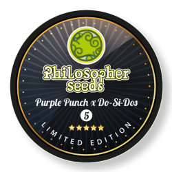 purple-punch-x-do-si-dos_193_1_.jpg
