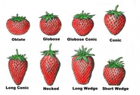 tipos-de-fresas.thumb.png.da94c8bf6a1ea9c595cc76f439dab34f.png