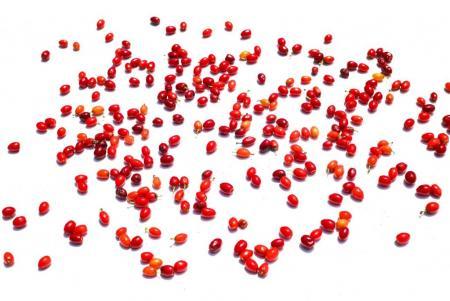 Semillas de coca Hojas de coca Coca seeds Coca leafs Erythroxylum coca te S_1.JPG