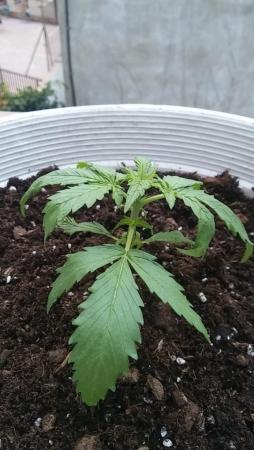 plant2.thumb.jpg.cbc2a4807a62e4e2570c948ceb9d953b.jpg